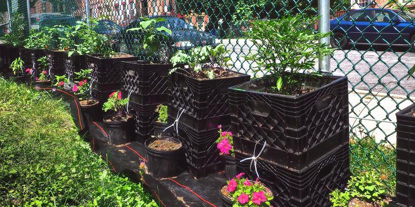 Lander Street Milk Crate Garden