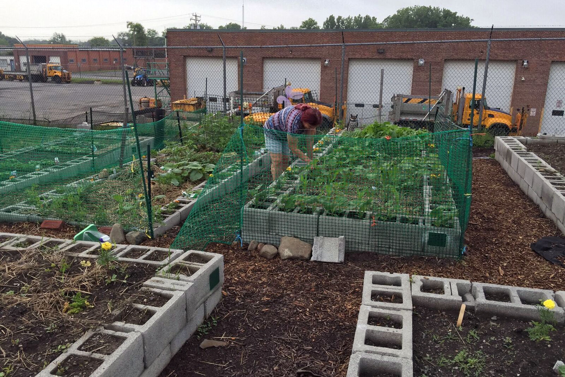 Gardening At NAUC